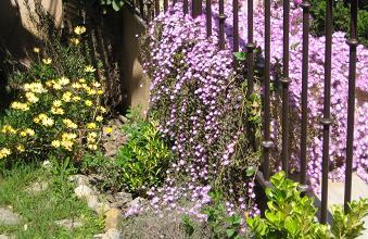 trocito de jardín