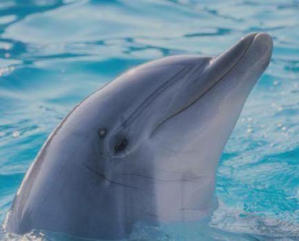 delfin predestinado al mando