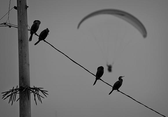 el poste de aviación con pájaros y parapente