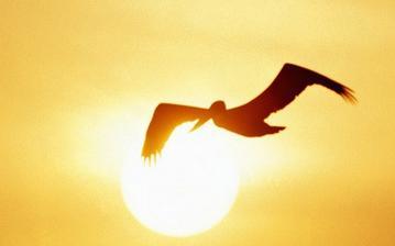 gaviota volando a contraluz