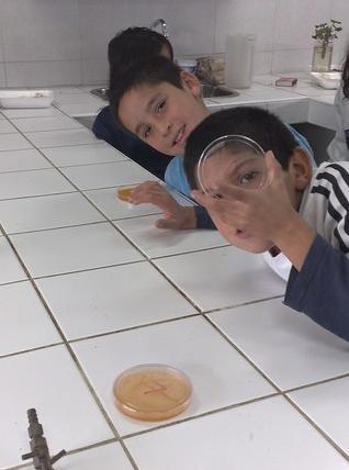 cultivo de bacterias en laboratorio colegio